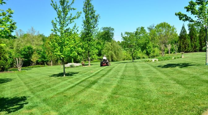 Should You Hire A Lawn Care Service?